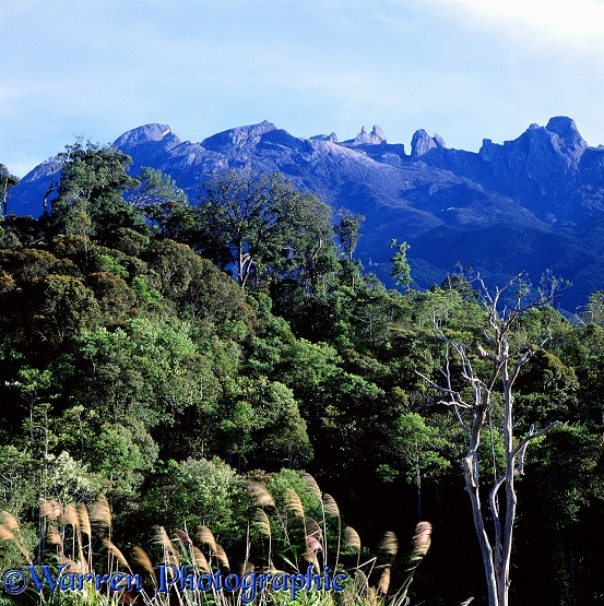 Mt. Kinabalu and forest.  Borneo