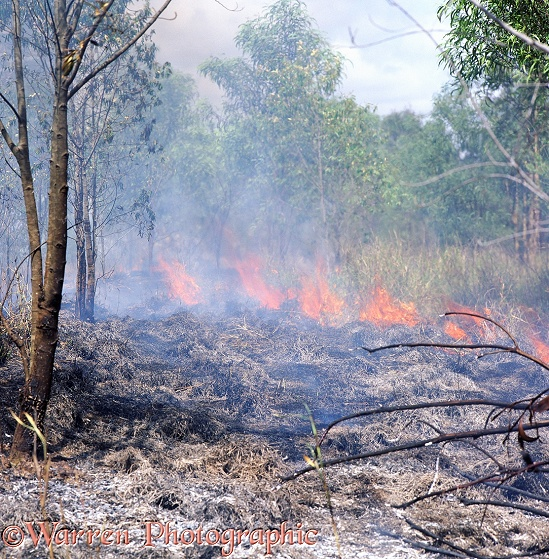Bush fire in Queensland.  Australia