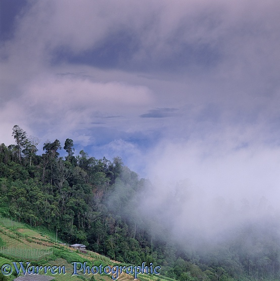 Forest & low clouds.  Borneo