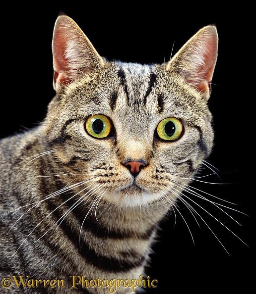 Cat S Uk