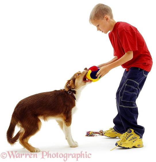 James playing tug-o-war with a dog, white background