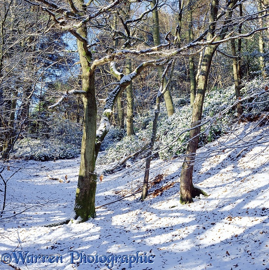 Winter woodland scene 3D R