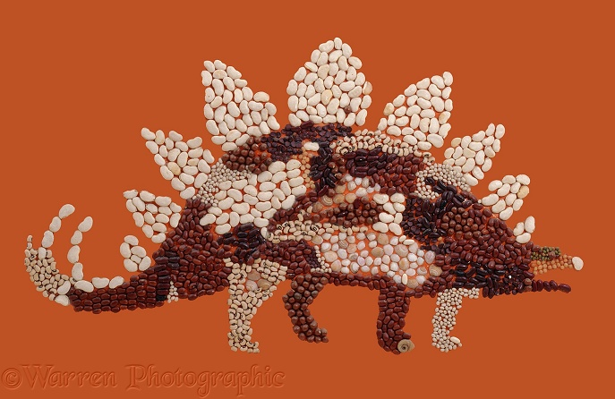 Bean and shell Stegosaurus