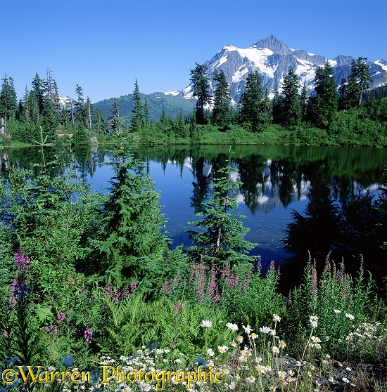 Flowers in front of Highwood Lake and Mt. Shuksan.  Washington State, USA