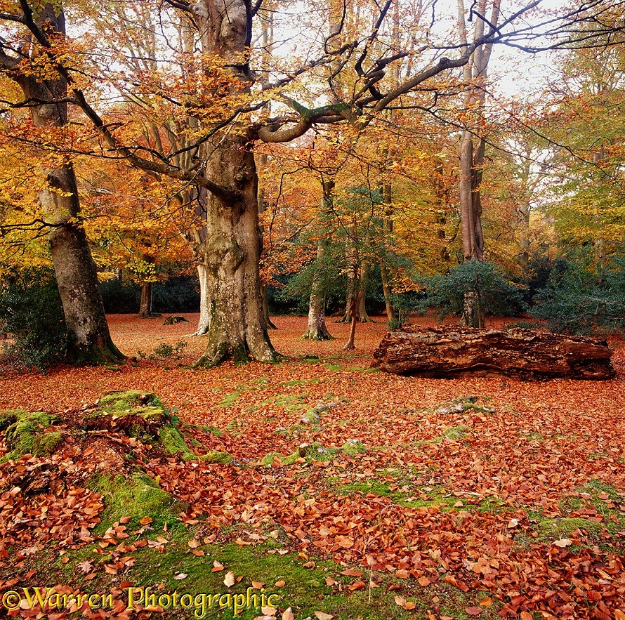 New Forest scene