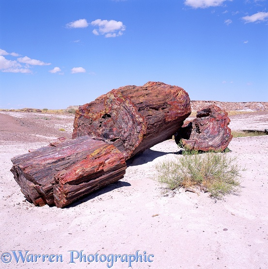 Petrified wood.  Petrified Forest National Park, USA