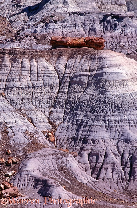 Late Triassic petrified wood and Chinle Formation (clay and sandstone).  Petrified Forest National Park, USA