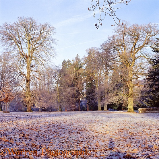 Albury Park winter scene with frost.  Surrey, England