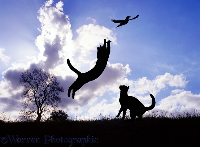 Silhouette cat leaping at a bird