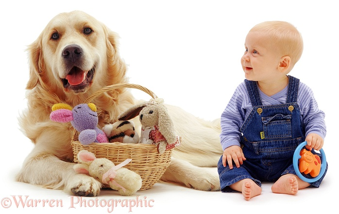 Baby Siena, 6 months old, and Retriever with a basket of toys, white background