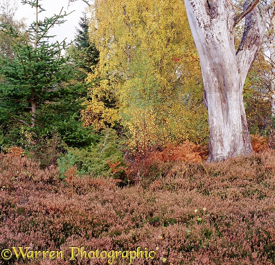Autumnal moorland 3D 1 R.  Glen More, Scotland