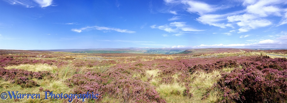 North York Moors panorama.  Yorkshire, England