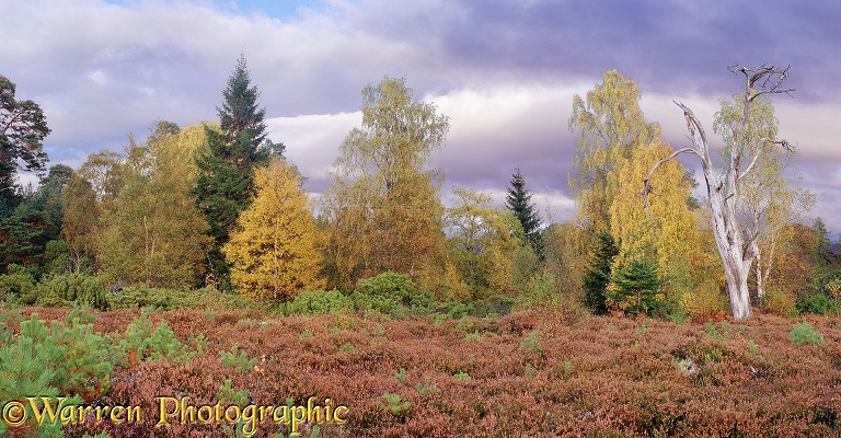 Autumnal moorland scenery.  Glen More, Scotland
