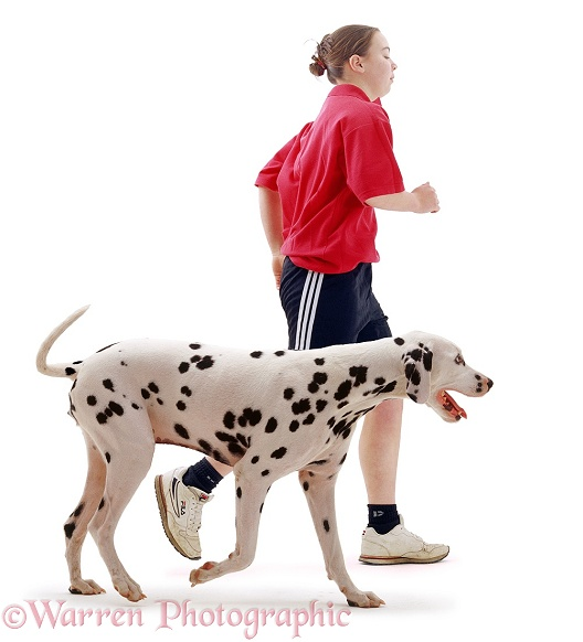 Dalmatian running with jogger, white background