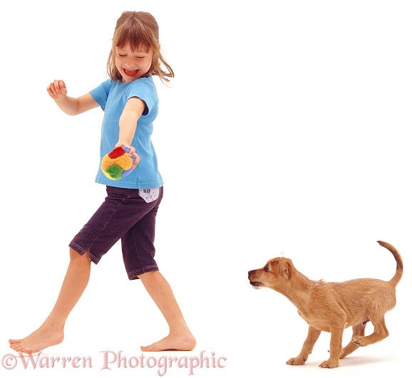 Terrier puppy, Winston, going for a walk with a young girl, white background