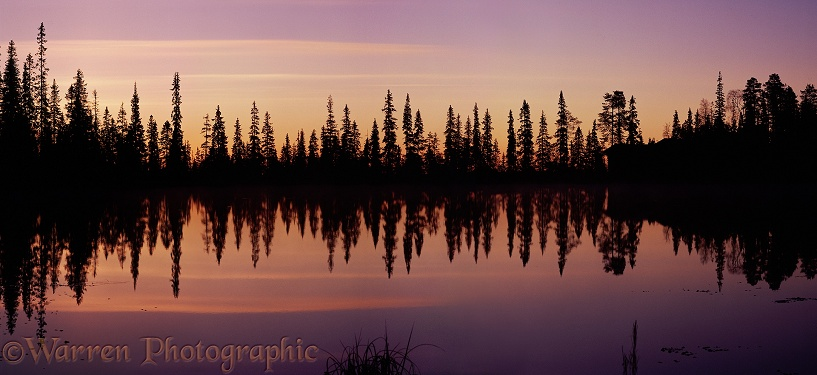 Reflected conifers at sunrise.  Finland