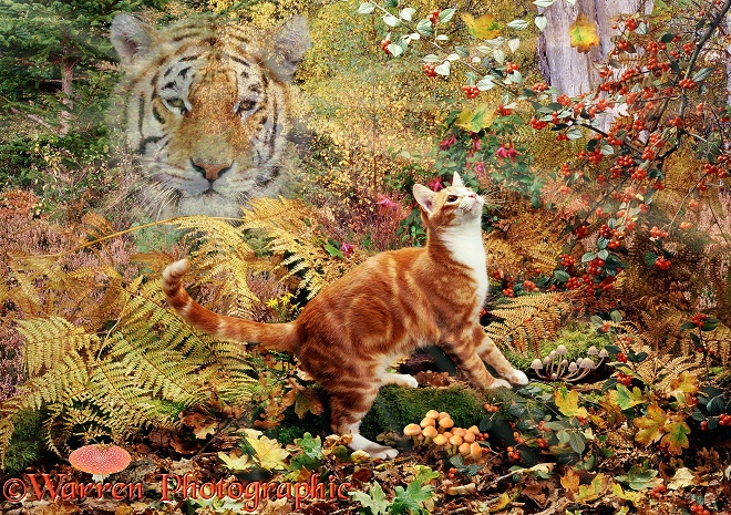 Ginger cat and Spirit Tiger jigsaw