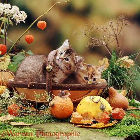 Two kittens in a trug basket with snails and fruit