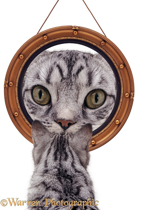 Cat looking at round mirror, white background