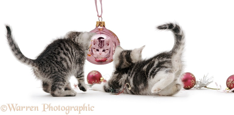 Kittens with Christmas baubles, white background