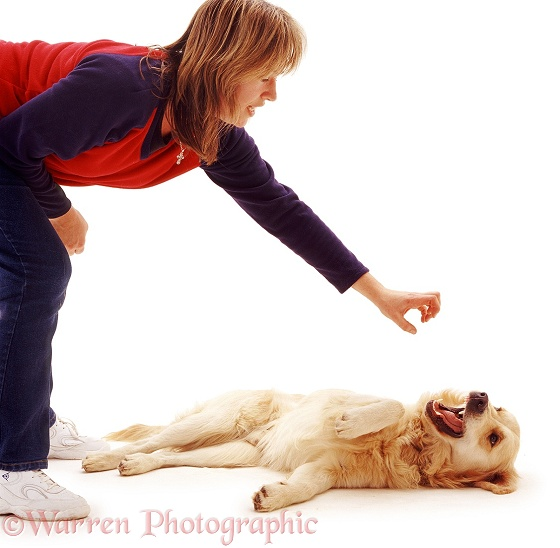Golden Retriever dog Jez mouth-fencing with owner's hand, white background