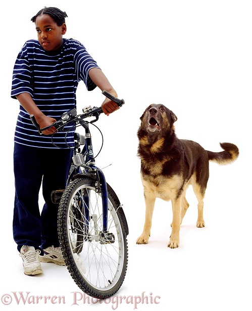 Boy, Laurrie, 11 years old, with adult German Shepherd Dog, Inca, white background