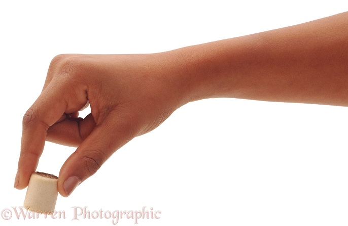 Holding titbit between thumb and finger, white background