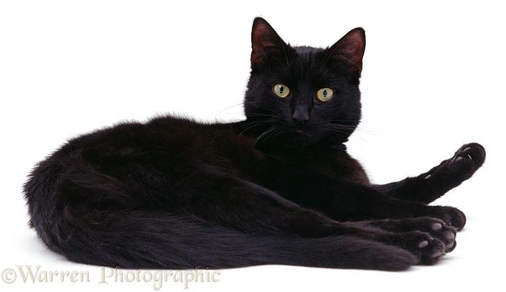 A Black Cat Lying Down