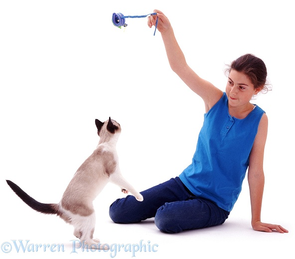 Catherine with Bengal-cross catten Eyebright leaping for a toy, white background
