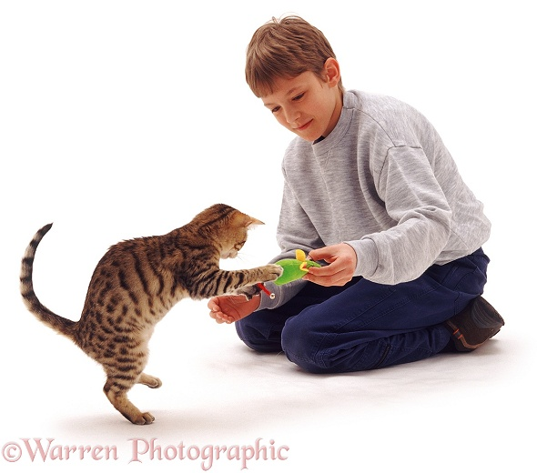 Joseph (12) with Brown Spotted Bengal catten with catnip mouse toy, white background