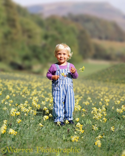 Siena with cowslips