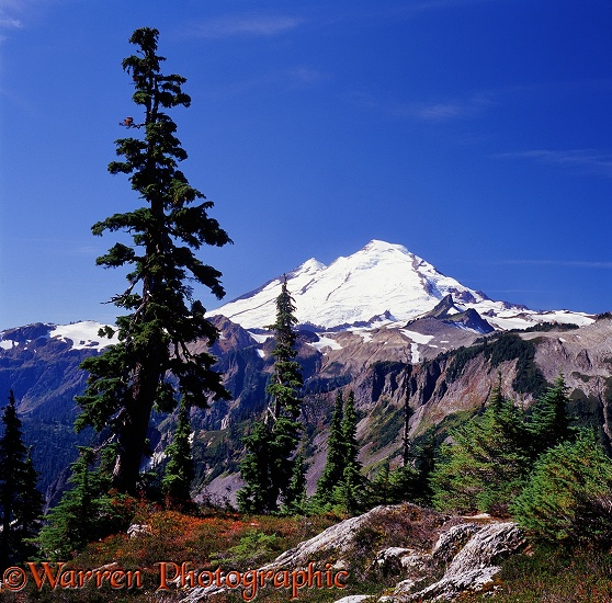 Mt. Baker.  Washington State, USA
