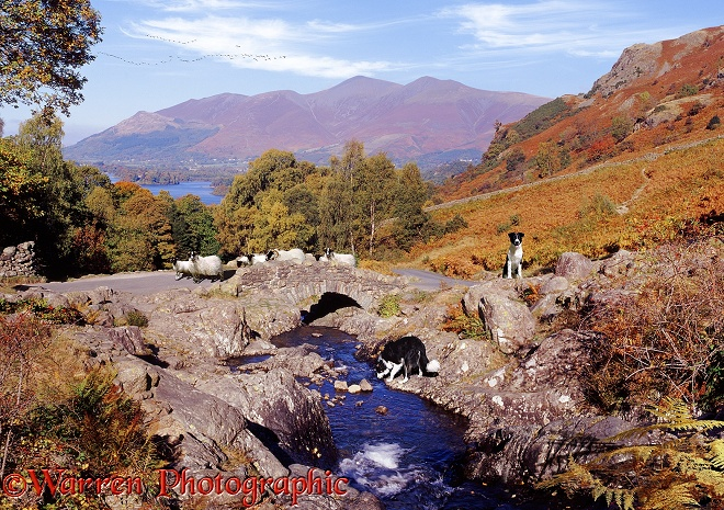 Ashness Bridge jigsaw.  Lake District, England