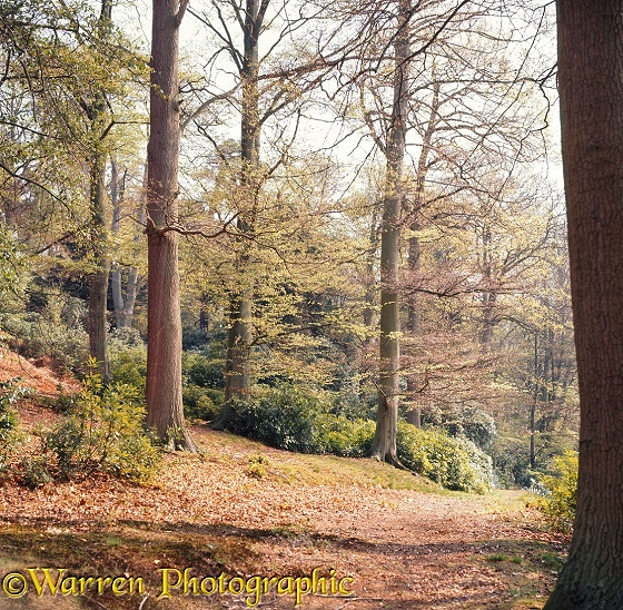 Weston Wood - 4 seasons - Spring