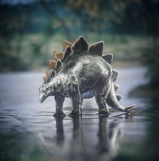 Stegosaurus standing in water