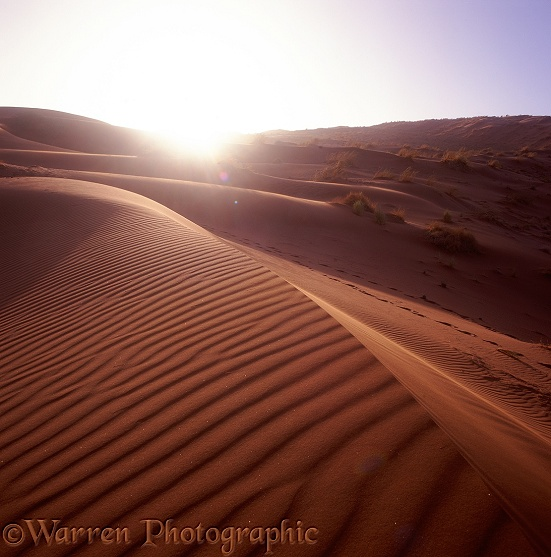 Sand dune at sunset.  Namibia
