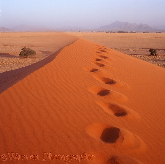 Foot prints in a sand dune.  Namib Desert, Africa