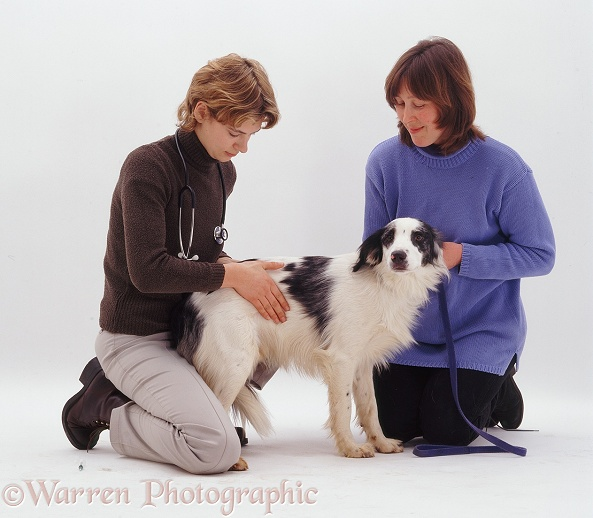 Vet, Rachel, examining Springer-x-Border Collie Rio held by his owner, Jackie, white background