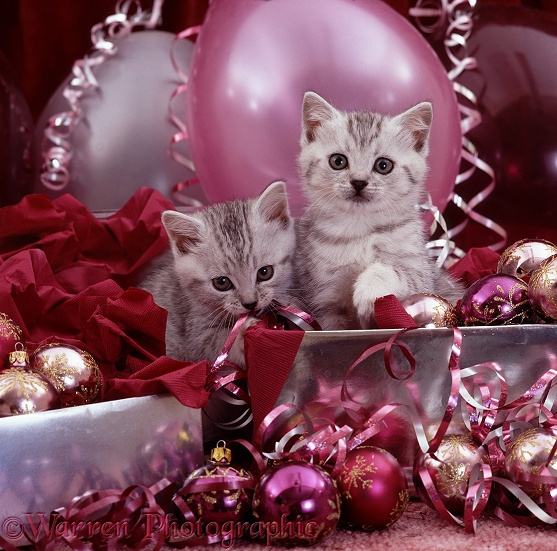 Silver kittens and pink Christmas decorations