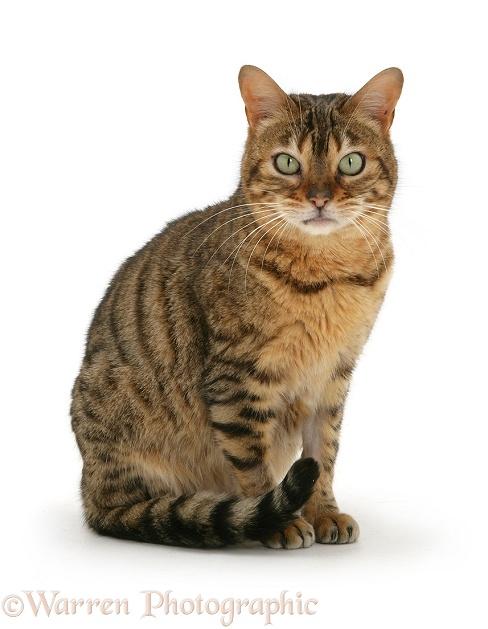 Female Vs Male Cat Hair