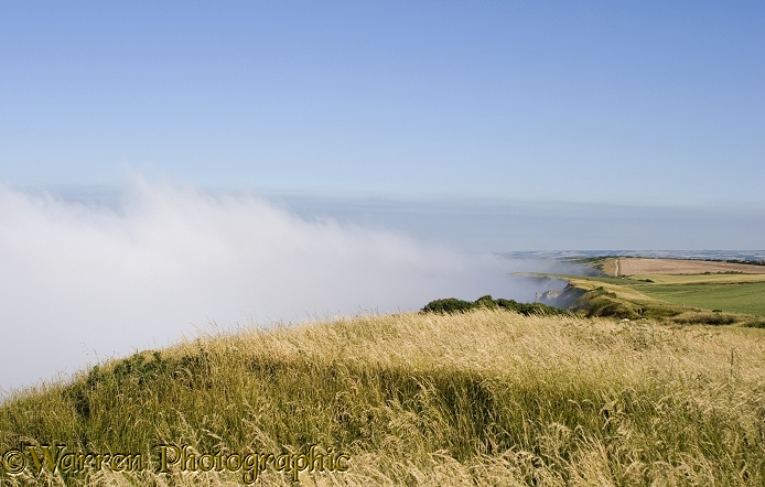 Sea mist welling up beneath 150m chalk cliffs and being blown back out to sea by light off-shore breeze.  Dorset, England