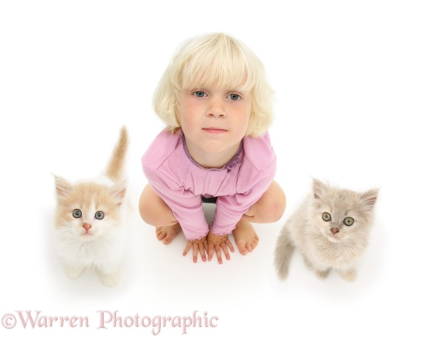 Siena with two kittens looking up, white background