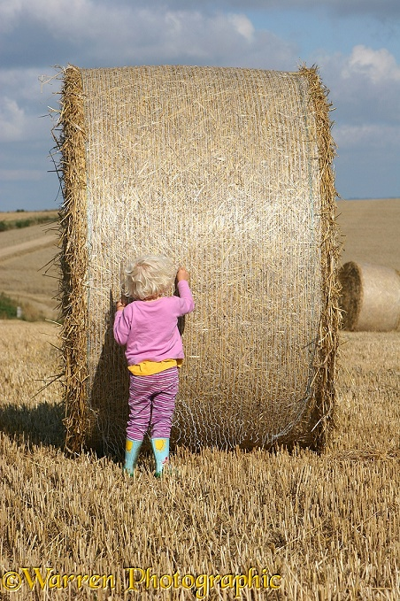 Siena with roly-poly bale.  Whitenothe, Dorset