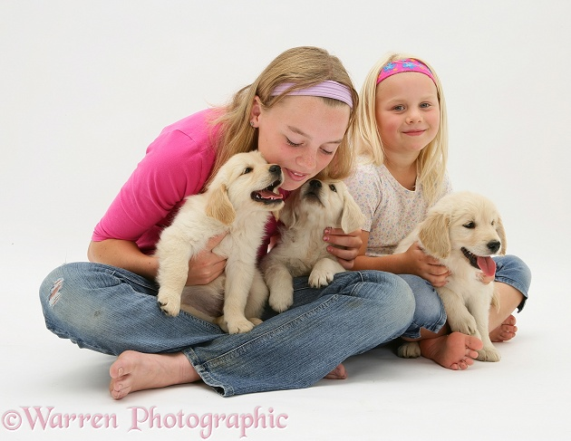 Lille and Rosie with three golden Retriever Lola pups, white background
