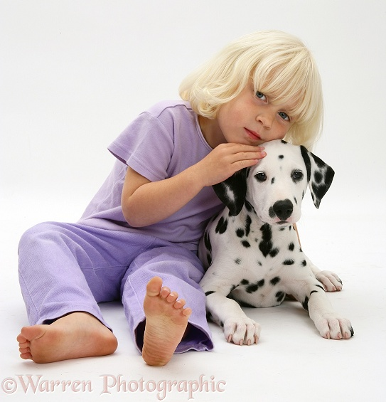 Siena and Dalmatian pup, white background