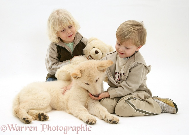 Siena and Matthew with white German Shepherd Dog puppy and teddy, white background