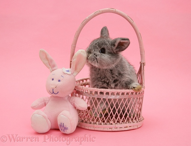 Baby rabbit in a pink wicker basket on pink background