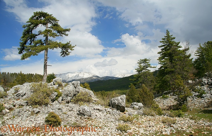 Rugged alpine scenery with limestone boulders