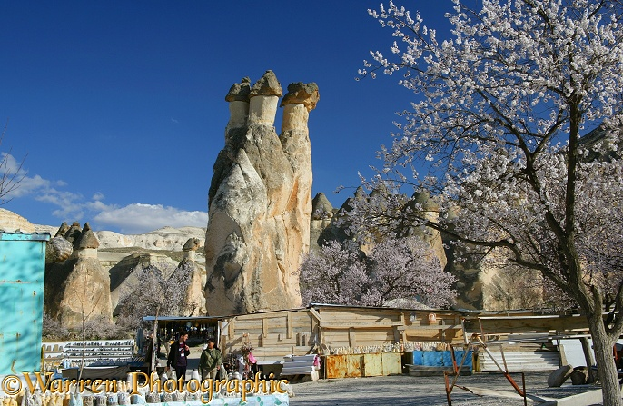 Triple headed fairy chimney and Sweet Almond blossom.  Kapadokia, Turkey