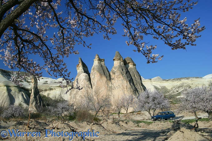 Blossom and fairy chimneys.  Kapadokia, Turkey